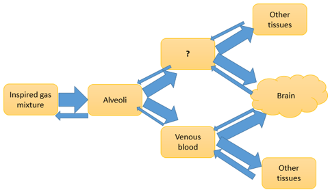 drug-biotechnology-questions-answers-mechanism-action-general-anesthetics-q14