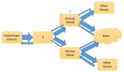 drug-biotechnology-questions-answers-mechanism-action-general-anesthetics-q15