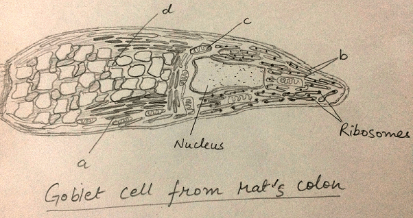cell-biology-questions-answers-endoplasmic-reticulum-q8