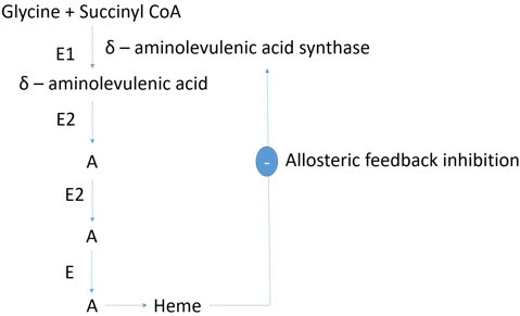 enzyme-technology-questions-answers-allosteric-enzyme-q10