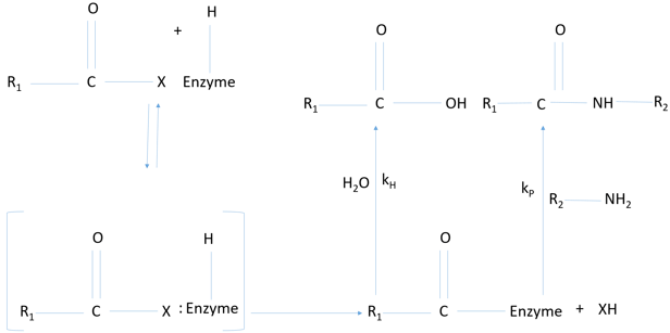 enzyme-technology-questions-answers-practical-examples-use-enzymes-reverse-q10