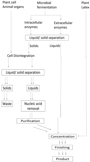 enzyme-technology-questions-answers-preparation-enzymes-clarified-solution-q6