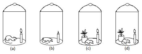 Joseph Priestly experiment diagram