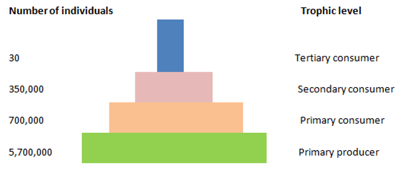 Pyramid of numbers in an ecosystem diagram