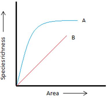 Blue line (A) rectangular hyperbola graph
