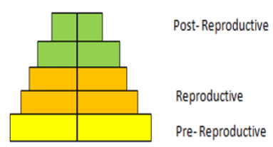 Find the age pyramid of expanding population from the given diagram